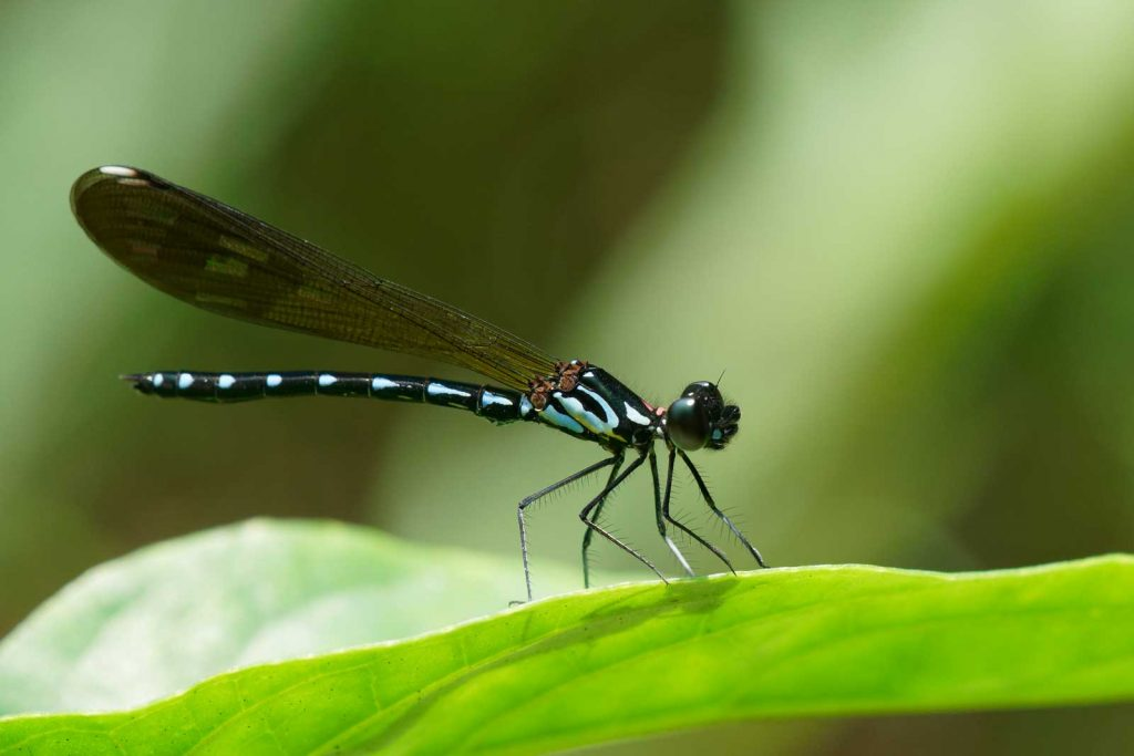 Close up of a Dragon Fly shot by Ansel.ma